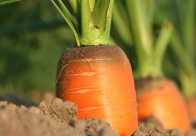 Légumes au printemps