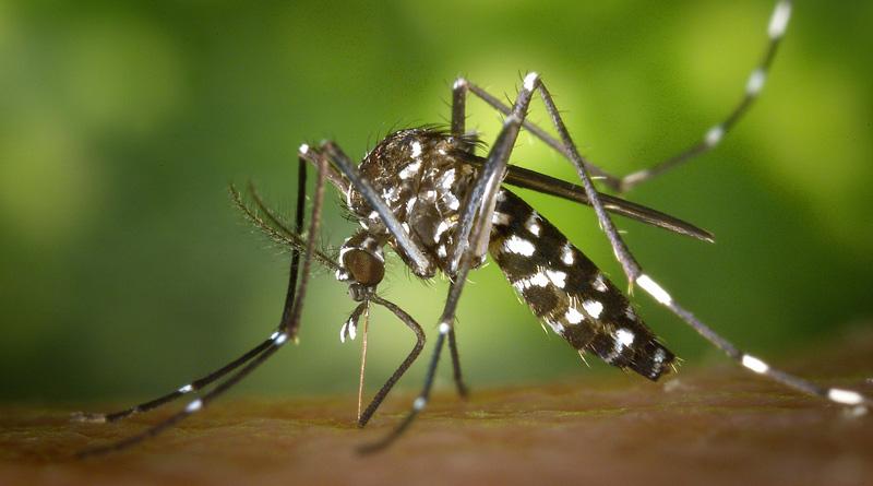 piqûre moustiques