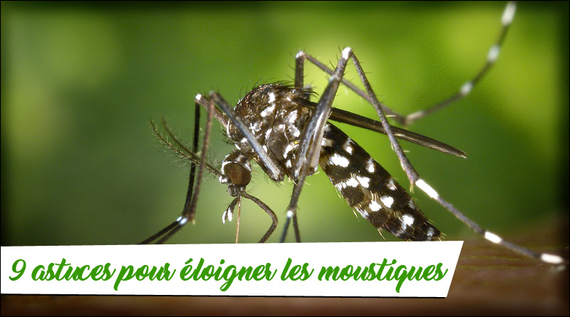 eloigner moustiques