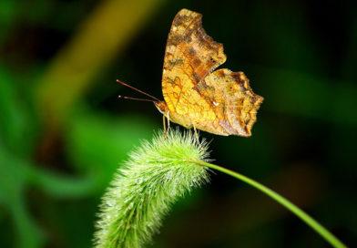 A quoi servent les insectes de notre jardin ?