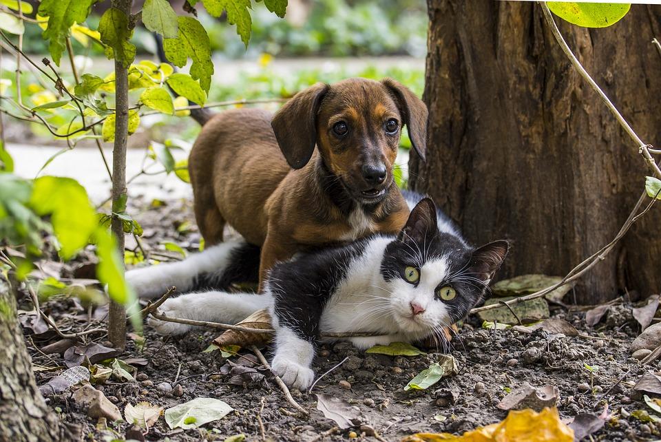 Même votre animal de compagnie peut s'essayer au Zéro Déchet !