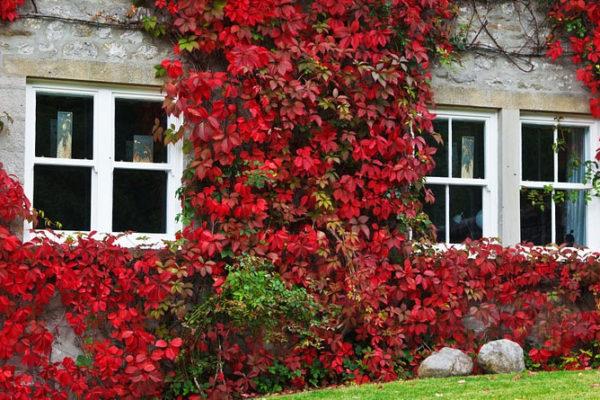 Comment garder votre dynamisme à l'automne ? Un espace de vie réconfortant