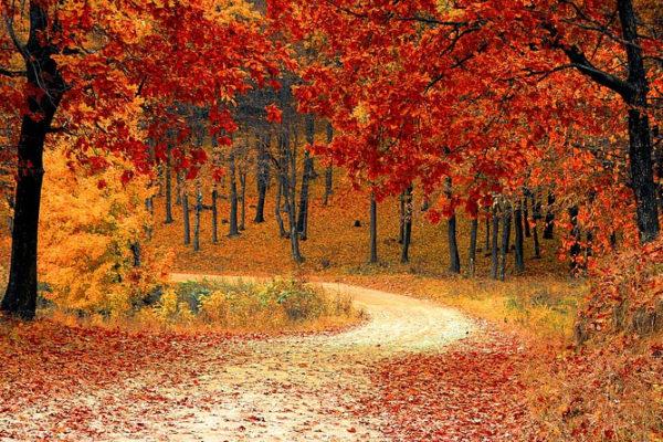Comment garder votre dynamisme à l'automne ? Une hygiène de vie au top