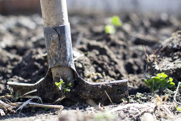 Quoi planter en janvier ?