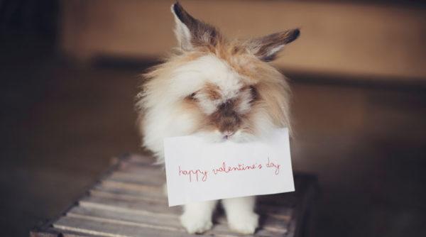 14 cadeaux écoresponsables à offrir pour la St Valentin