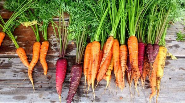 5 vertus de la carotte