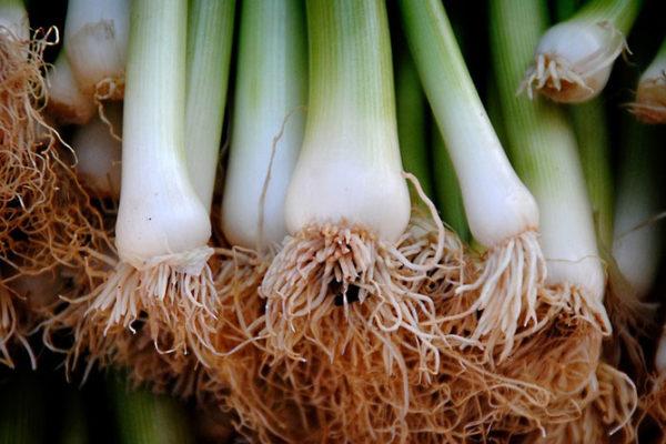 Le top 10 des légumes qui repoussent facilement à l'infini