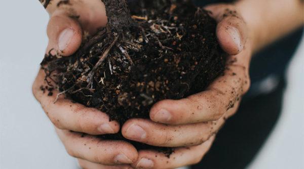 Jardinez en mai : ce que vous avez à faire au potager