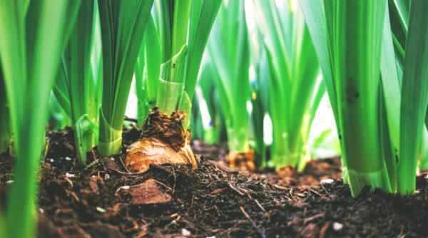 Jardin, potager et terrasse : ce qu'il y a à faire en juin