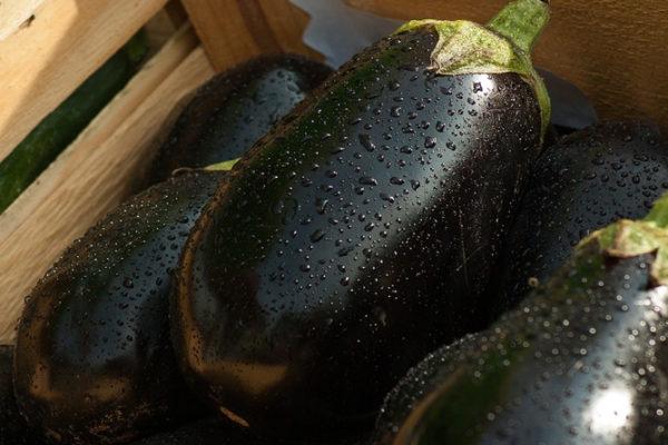 L'aubergine : ses bienfaits et ses vertus