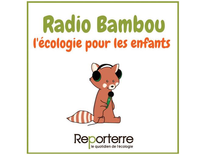 radio-bambou