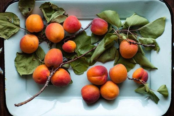 La recette abricots au thon pour une entrée sucrée-salée