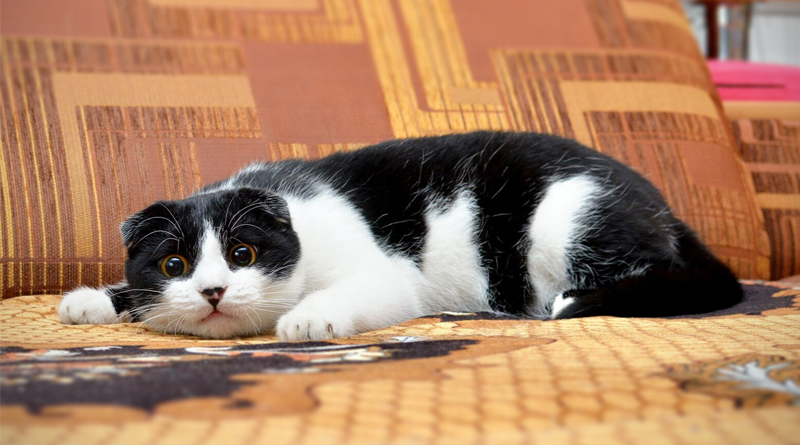 chat-pipi